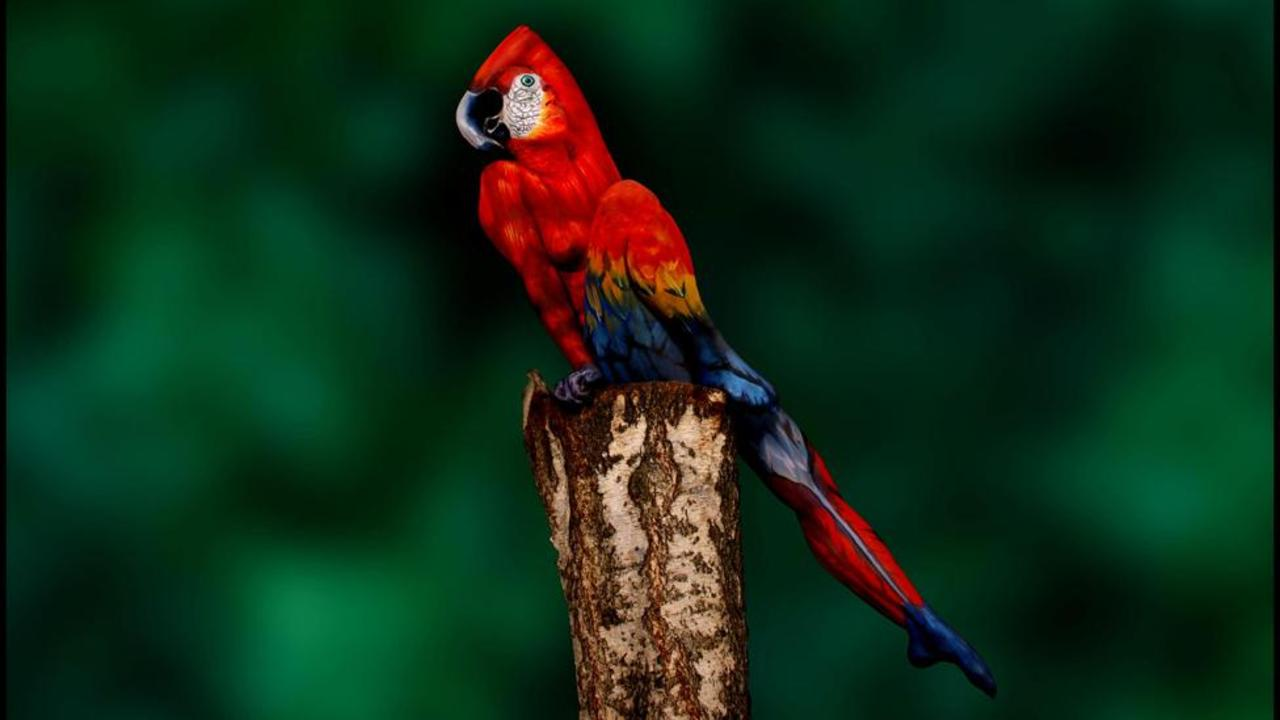 How the difference between a parrot and woman is important for your business